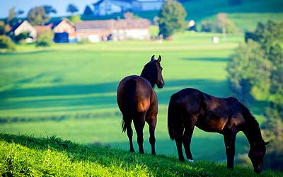 Longview Texas Equine Property for sale